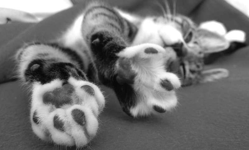 coixinets-gat