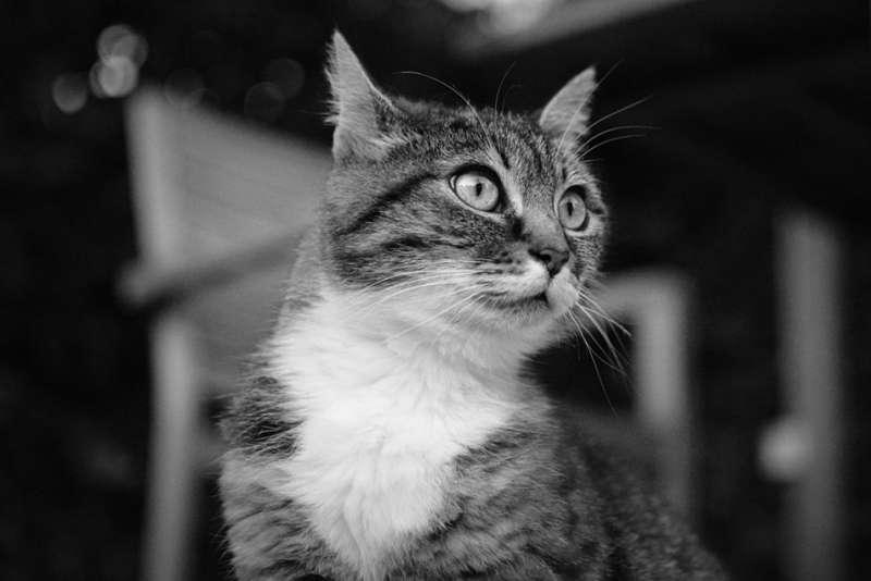 gato-casa